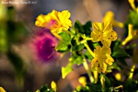 2017-09-02 flores