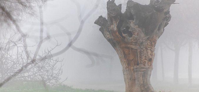 Paseo Fotográfico – Niebla en Safont